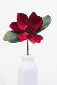 Magnolia Red with Green Leaves