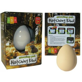 Hatching Kiwi Growing pet