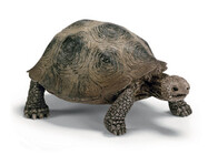 Schleich Collectables - Giant Turtle