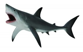 Collect A - Great White Shark